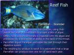 reef fish22