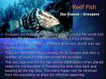reef fish23