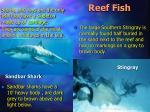 reef fish24