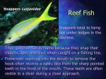 reef fish25