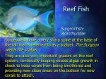 reef fish26