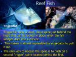 reef fish29