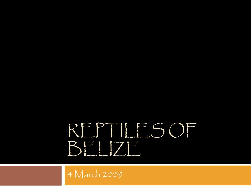 reptiles of belize l.
