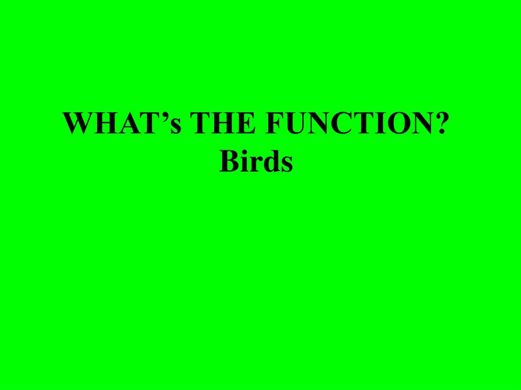 what s the function birds l.
