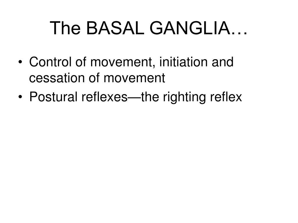 The BASAL GANGLIA…
