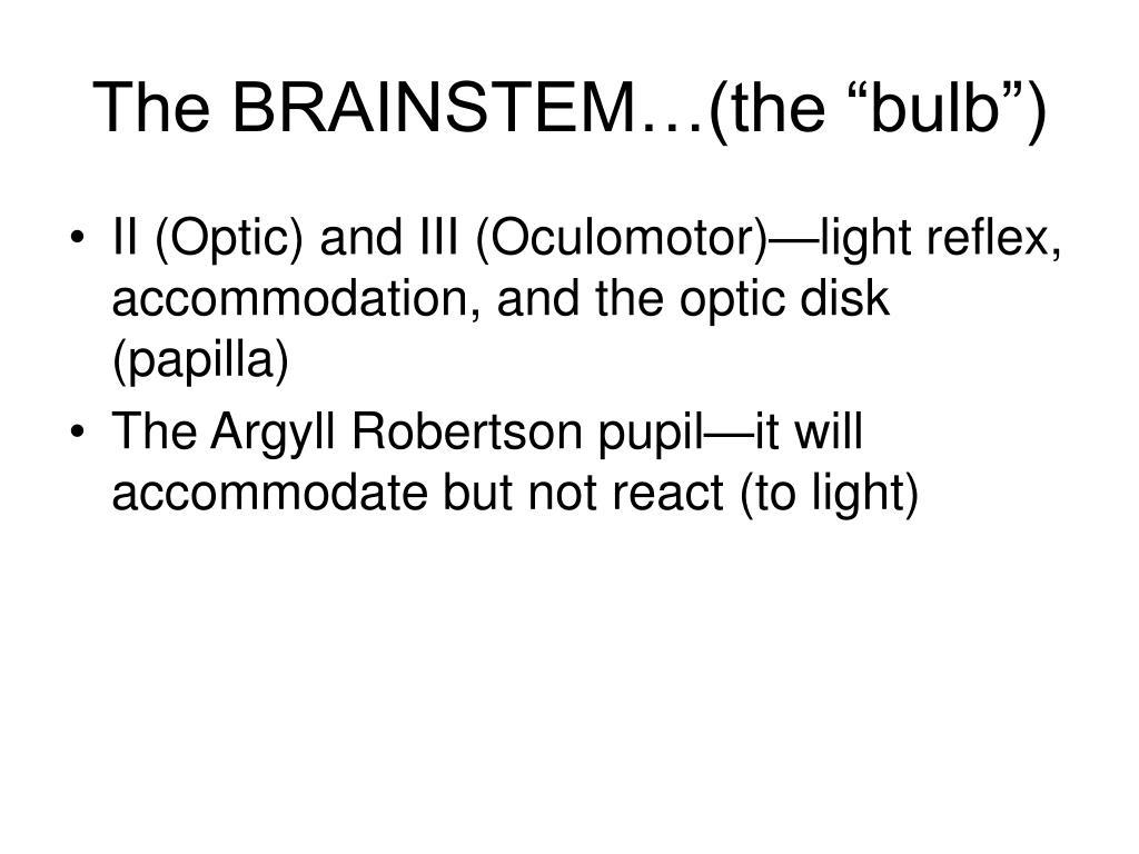 """The BRAINSTEM…(the """"bulb"""")"""