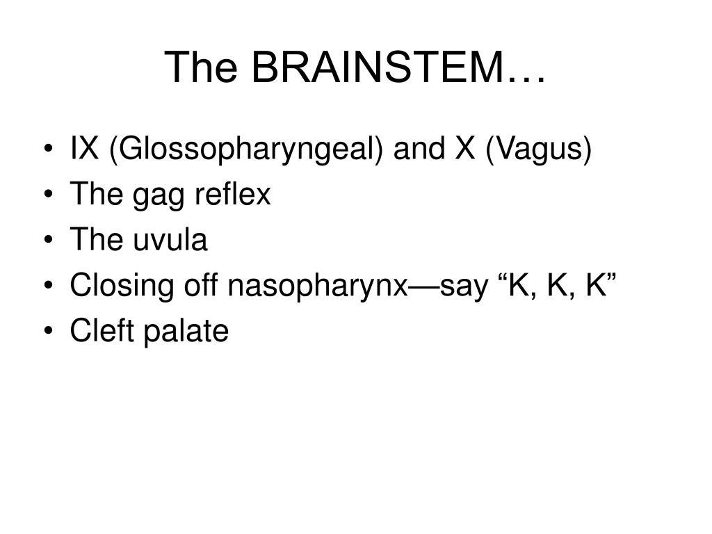 The BRAINSTEM…