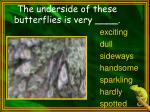 the underside of these butterflies is very