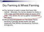 dry farming wheat farming