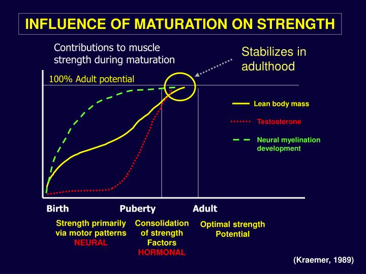 Stabilizes in adulthood