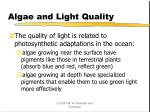 algae and light quality