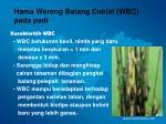 hama wereng batang coklat wbc pada padi10