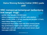 hama wereng batang coklat wbc pada padi9