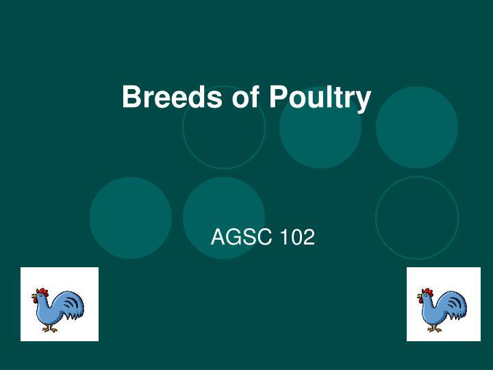 breeds of poultry n.