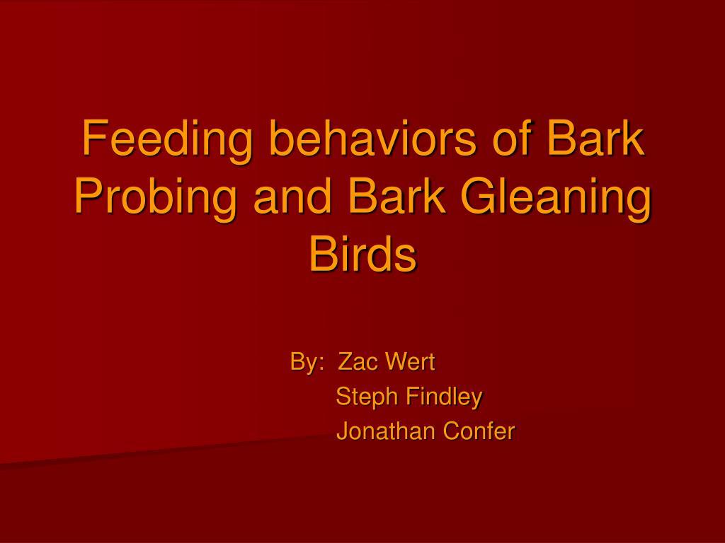 feeding behaviors of bark probing and bark gleaning birds l.