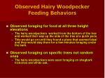 observed hairy woodpecker feeding behaviors