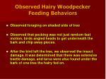 observed hairy woodpecker feeding behaviors13