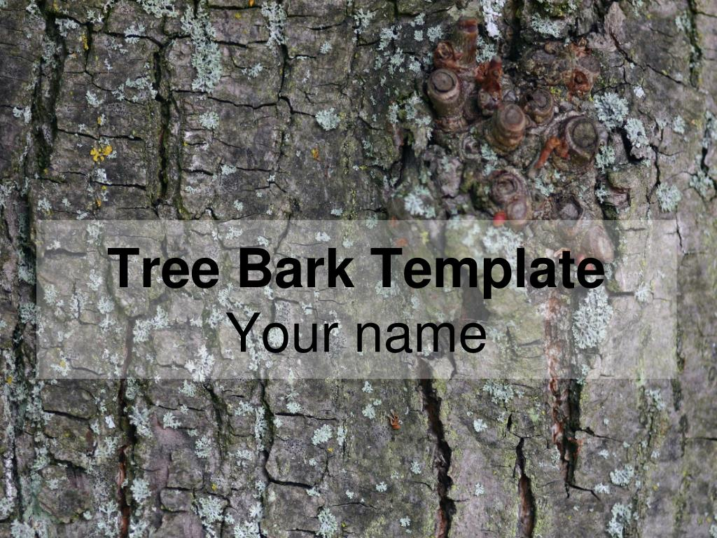 tree bark template your name l.