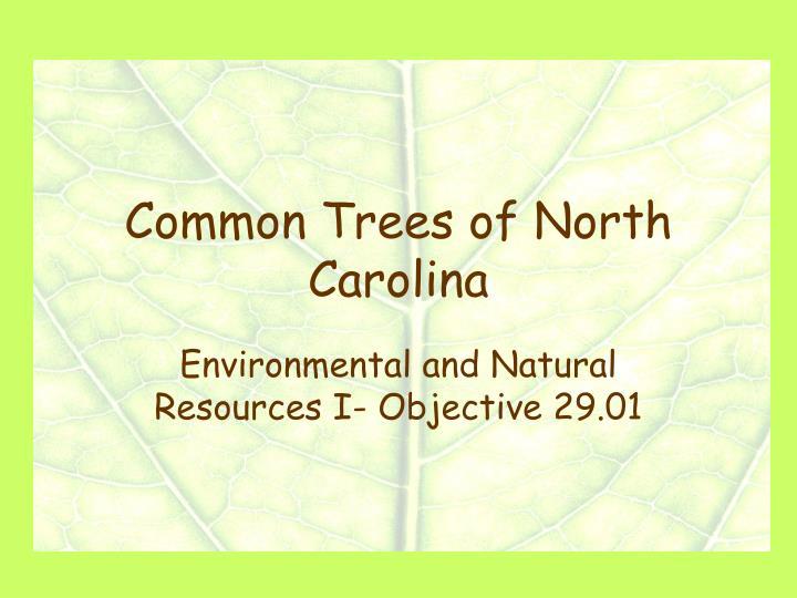 common trees of north carolina n.
