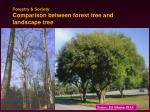 forestry society comparison between forest tree and landscape tree