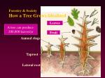 forestry society how a tree grows idealized