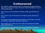 cottonwood17