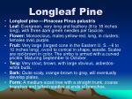 longleaf pine3