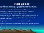 red cedar21