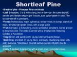 shortleaf pine5