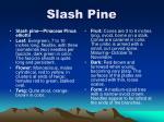 slash pine7
