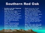 southern red oak9