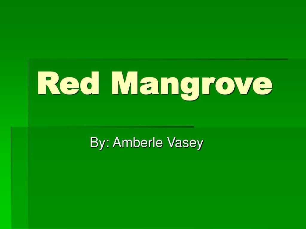 red mangrove l.