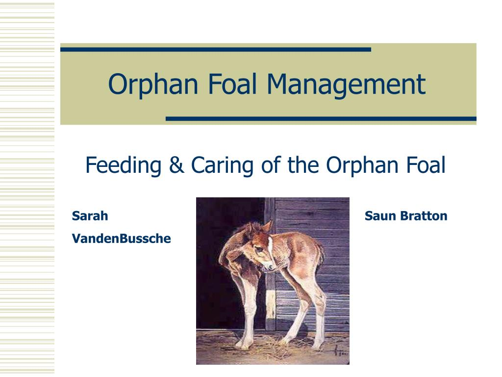 orphan foal management l.