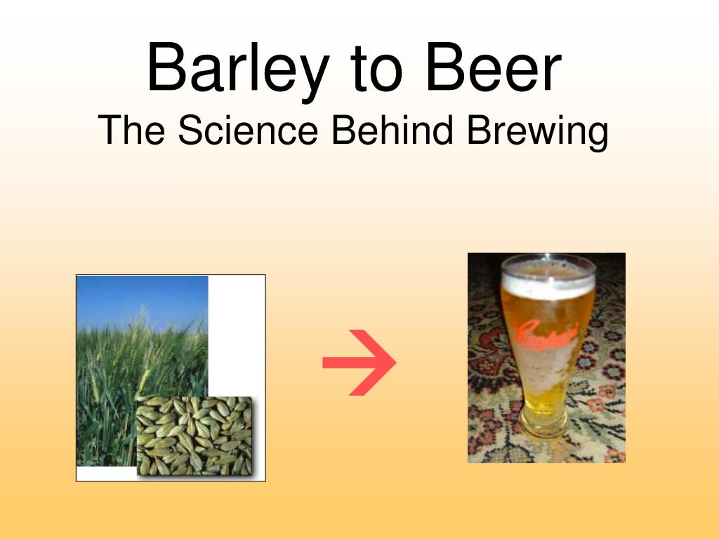 barley to beer the science behind brewing l.