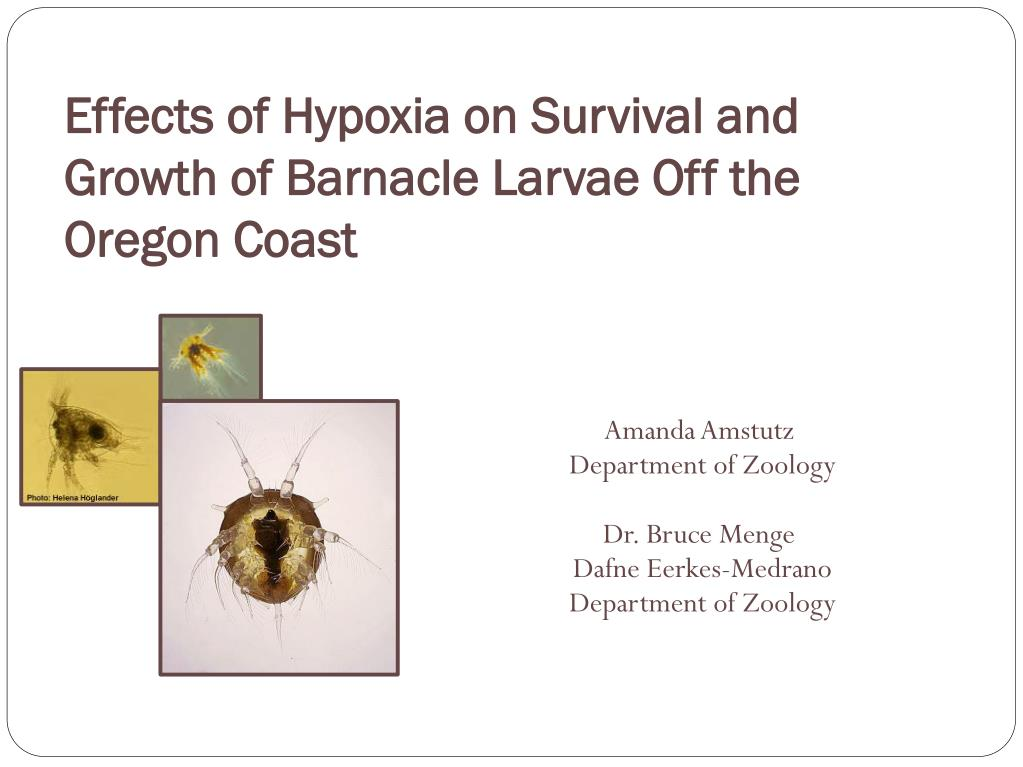 effects of hypoxia on survival and growth of barnacle larvae off the oregon coast l.