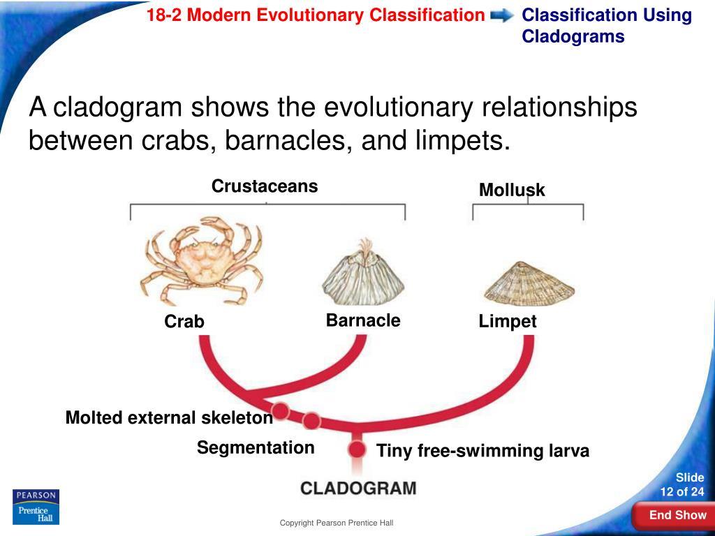 Classification Using