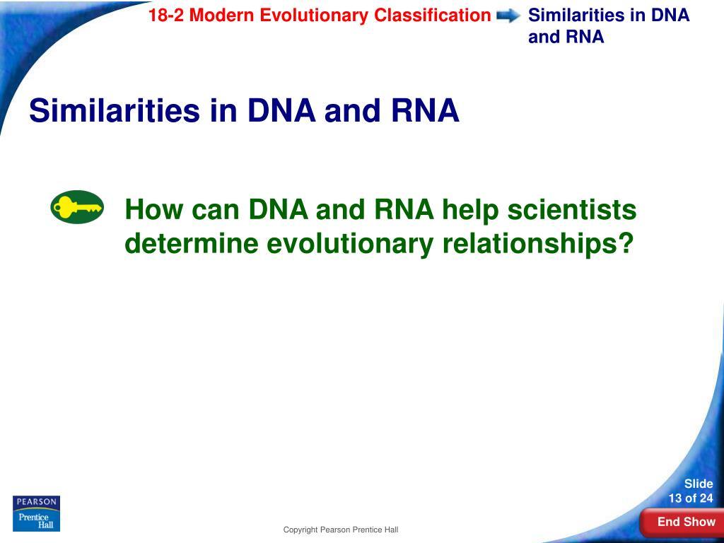 Similarities in DNA