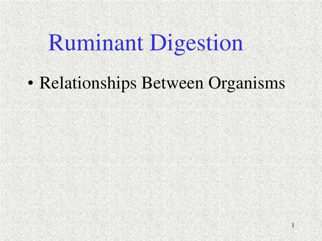 ruminant digestion l.