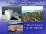 adaptations for life on a high energy rocky shoreline