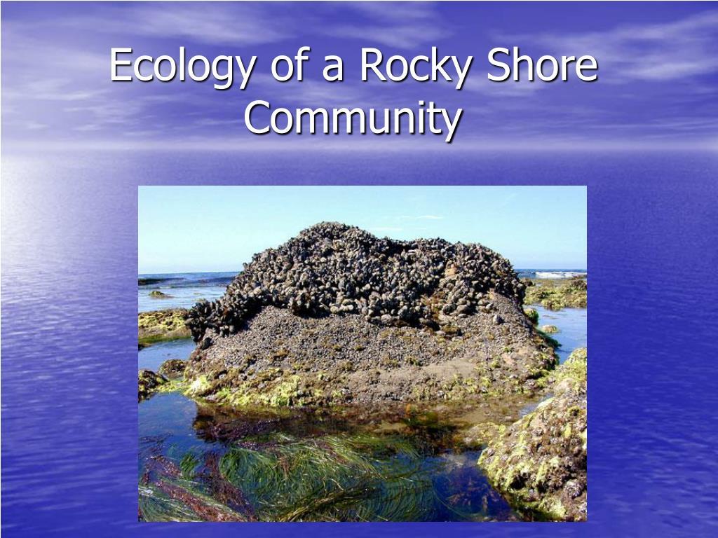 ecology of a rocky shore community l.