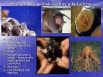 rocky shore animal feeding adaptations