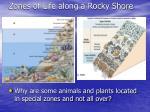 zones of life along a rocky shore