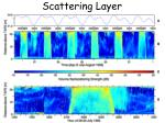 scattering layer