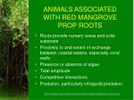 animals associated with red mangrove prop roots