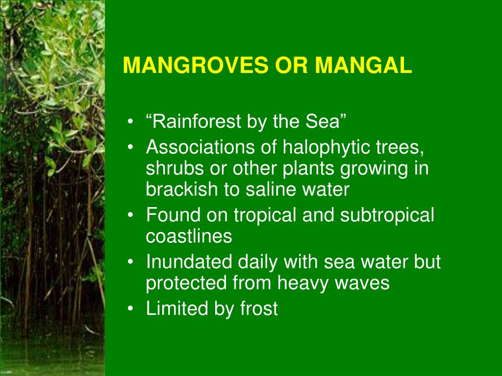 mangroves or mangal l.