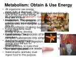 metabolism obtain use energy