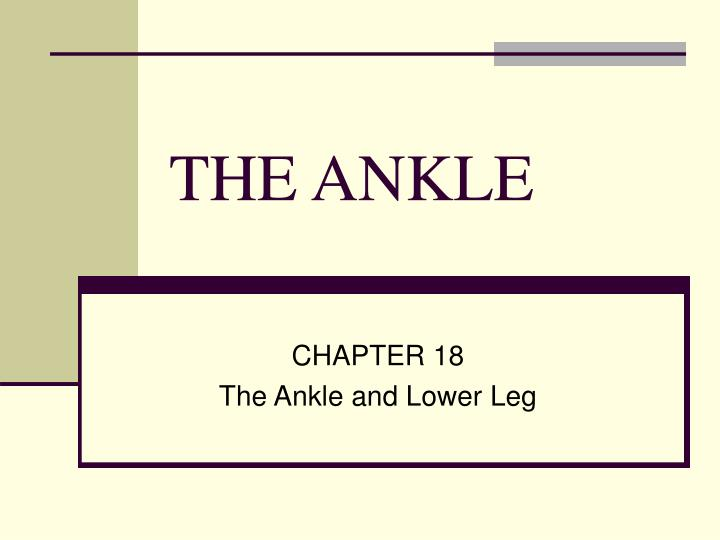 the ankle n.
