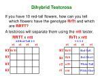 dihybrid testcross