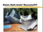 damn hell raisin racoons