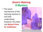 gram s staining a mystery